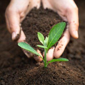 CTC do solo e sua importância